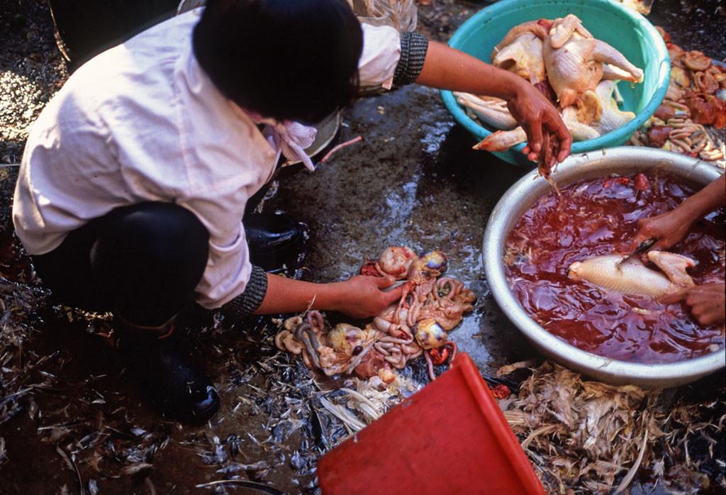 Allarme Cibi Tossici, dalle Nocciole Turche al Pesce Vietnamita. Ecco la Blacklist dei più Pericolosi