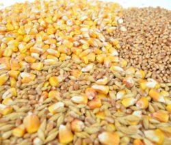 I 12 cereali integrali: li Conosci? Li Mangi? Ecco 7 Ricette per te.